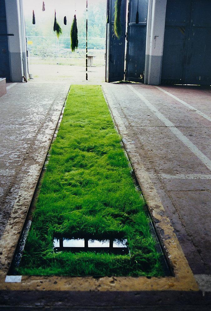 """""""Hängende Gärten"""", Panzerhalle Groß Glienicke, Berlin, 1999"""